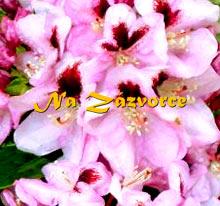Rhododendron ´Lugano´