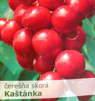 Třešeň Kaštánka