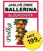 Sloupovitá jabloň BALLERINA Polka®