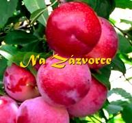 Myrobalán plodový ´Ruská Džanarika´