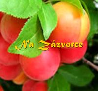 Myrobalán plodový ´Zurna´