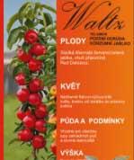 Sloupovitá jabloň BALLERINA Waltz®