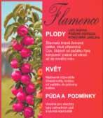 Sloupovitá jabloň BALLERINA Flamenco®