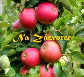 Sloupovitá jabloň Kichina´s Summer®