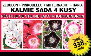 KALMIE SADA 4 KUSY (Zeb., Pinkob., Mitter., Hania)