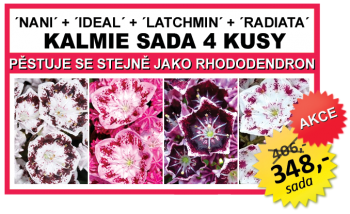 KALMIE SADA 4 KUSY (Nani, Ideal, Latchmin, Radiata)