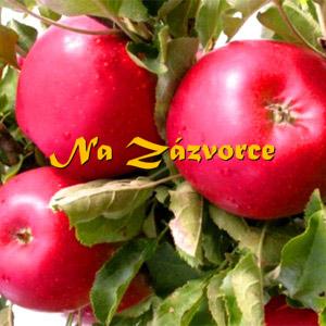 Sloupovitá jabloň Red Spring®